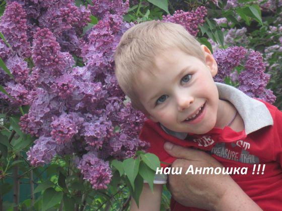Душинов Антонов